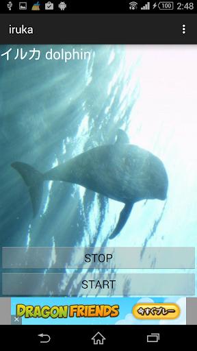 動物鳴き声イルカ