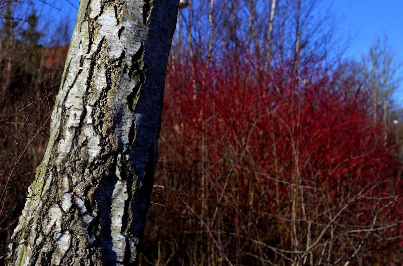 Red in Spring di Marco Rizzi
