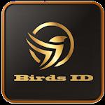 Online bird identification