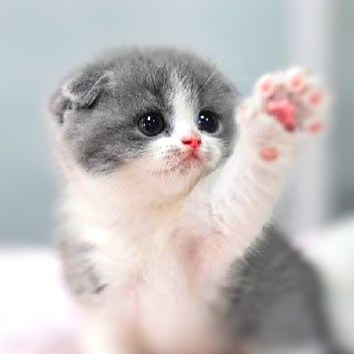 Cat Wallpaper Hd Cute Gifs Videos Wastickers Apps On Google Play
