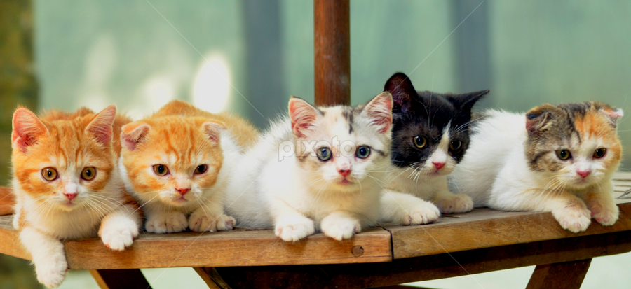 Babies on the Table by Cacang Effendi - Animals - Cats Portraits ( cats, kitten, chandra, catery, animal )