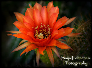 Photo: Good night.... :))  Saija Lehtonen Photography  #Floral #Flower #Nature #Photography  #Southwest #Cactus #Red #MacroMonday