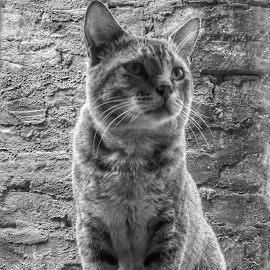 We call her hulo by Sayantika Saha - Animals - Cats Portraits ( cats, mobilography, potrait, black and white, hulo,  )