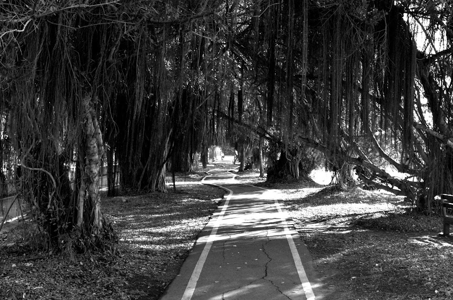 into the woods by Mark Pope - City,  Street & Park  Neighborhoods ( forrest, black and white, trail, path, trees )