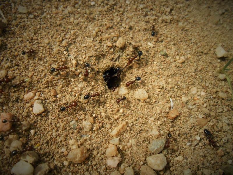 Il cammino delle formiche di danca1