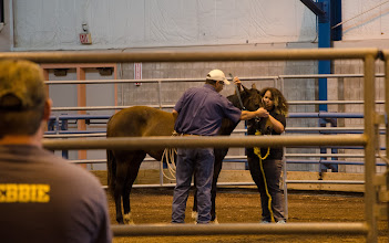 Photo: High school students in the Governor's School program are instructed on horse training by an Penn State Equine Science instructor in the Snider Ag Arena, University Park.