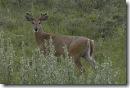 060602 Deer FshCrk 07