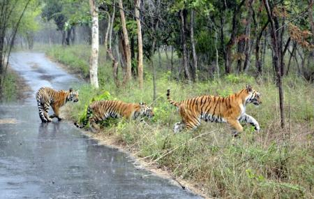 Image result for nagarhole national park images
