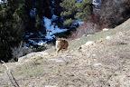 Banks, Lawman, Idaho City 2.04.2008 005.jpg