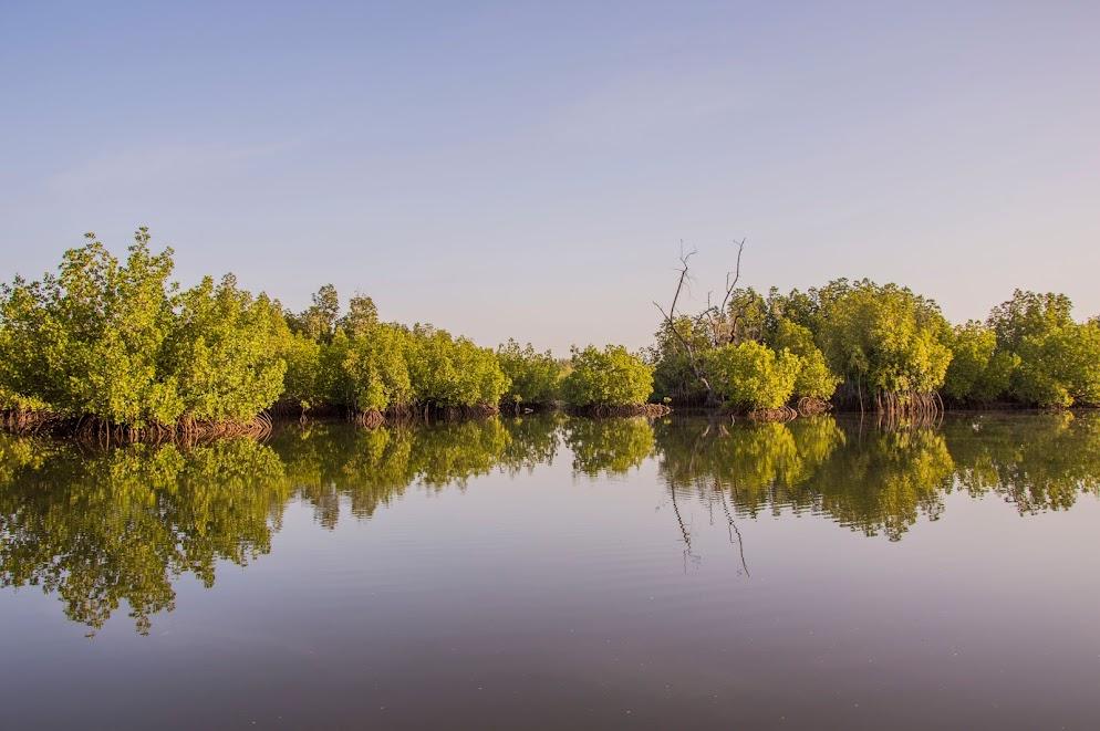 mangroves-gambia