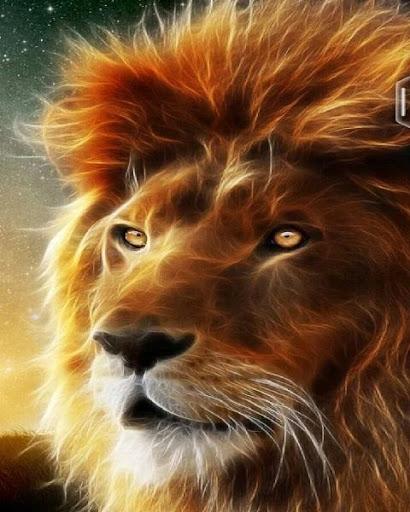 Sư tử hình nền