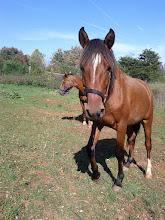 Photo: Horse 4