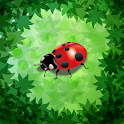 Coccinelle icon