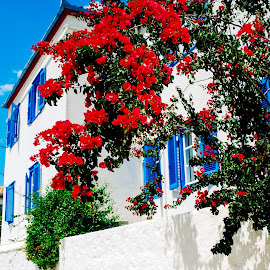 Street by Athena Kapsokavadi - City,  Street & Park  Neighborhoods ( red, white, plant, house, flower )