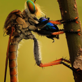 Sure Breakfaxt by Faiq Alfaizi - Animals Insects & Spiders