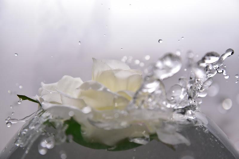 Amo le rose bianche di Ilaria Bertini