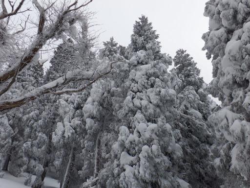 樹氷なのか?