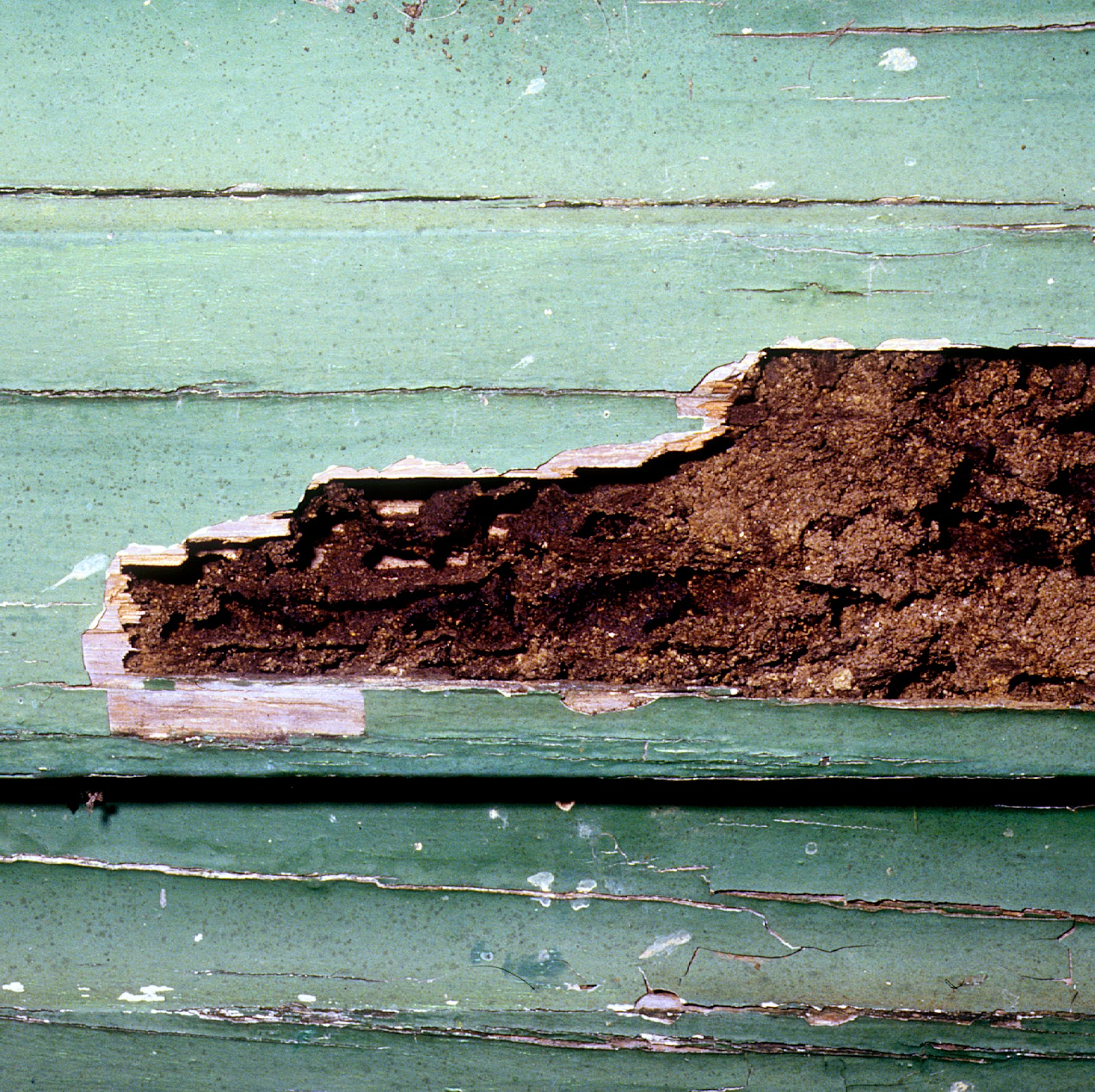 CSIRO_ScienceImage_2185_Termite_Damaged_Weatherboard.jpg
