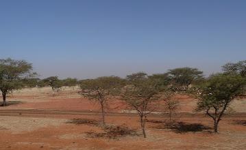 Photo: Akazien übernehmen das Terrain