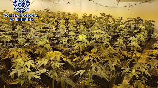 Fiscalía pide 5 años para un policía local por cultivar marihuana