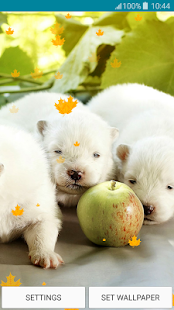 Live Wallpapers – Puppies - náhled
