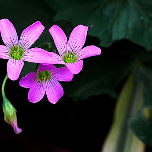a bunga.jpg