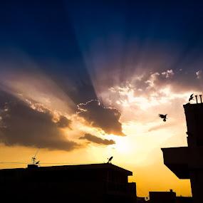 Sunny hues by Shashank Ramesh - Landscapes Sunsets & Sunrises ( building, silhoutte, solar, yellow, landscape, pwcsunbeams, rays, sun, bird, sky, pole, blue, sunset, india, sunrise, golden hour )