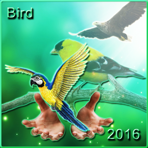 Bird Ringtones 2016