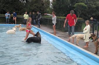 Photo: Het is wel opletten met zoveel honden