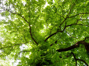Photo: bottom-up  #treetuesday // +Tree Tuesdaycurated by+Christina Lawrie , +Shannon S. Myers , +Allan Cabrera , +Ralph Mendoza and +Kim Troutman #hqspnaturalother // +HQSP Natural Other