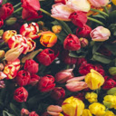 Floral and flowers Wallpapers New Tab Theme Icon