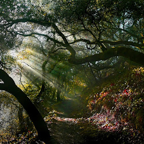 Sunrays by Gary Pope - Landscapes Forests