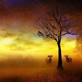 Waiting Sunset by Zainal Arifin  - Digital Art Things