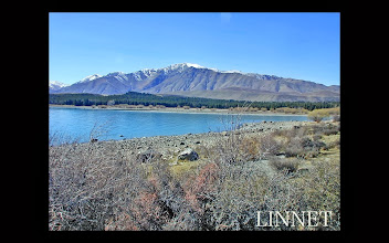 Photo: テカポ湖 Lake Tekapo