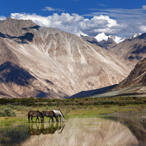 three mustang by Rulie Arifin - Landscapes Mountains & Hills ( himalaya, mountain, reflection, india, ladakh,  )