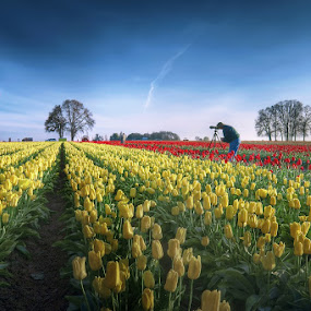The Paradise of photographer by William Lee - Nature Up Close Flowers - 2011-2013 ( farm, hot air balloon, tulip, photographer, flower, , Spring, springtime, outdoors )