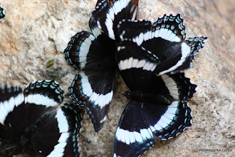 Photo: Butterflies at Kettle Pond State Park by David Green