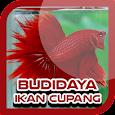 Budidaya Cupang icon