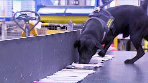 Canino en acción thumbnail