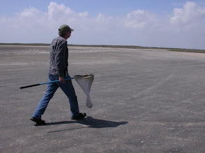 Photo: Crossing mud flat (tiger beetle habitat) on South Padre Island.