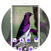 Elegant purple bird theme APK