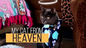 My Cat From Heaven thumbnail