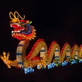 Lantern Festival 13 by Harvey Lindenbaum - City,  Street & Park  Night ( chinese lantern festival, night )