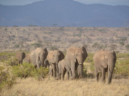 A file photo of elephants.