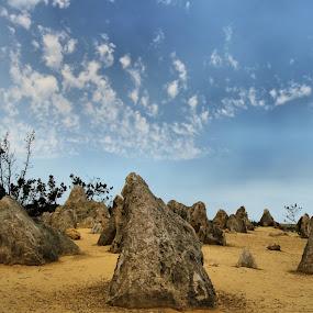 The Pinnacles - Western Australia by Clarissa Human - Landscapes Deserts ( sand, desert, landscapes, deserts, western australia,  )