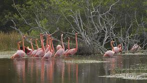 Galapagos: Darwin's Eden thumbnail