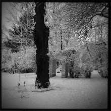 Photo: finally got some winter scenery. my husband shoveled a path to the tree for the pugs. :o)