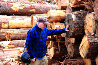 Photo: Wilderness Committee Campaign Director Joe Foy counts yearly growth rings on stacked up old-growth timber in a spotted owl wildlife habitat area located on the boundary of Garabaldi Park in the Lillooet Valley, BC.