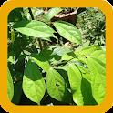 Heilkräuter - Heilpflanzen icon
