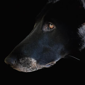 by Jay Gardella - Animals - Dogs Portraits